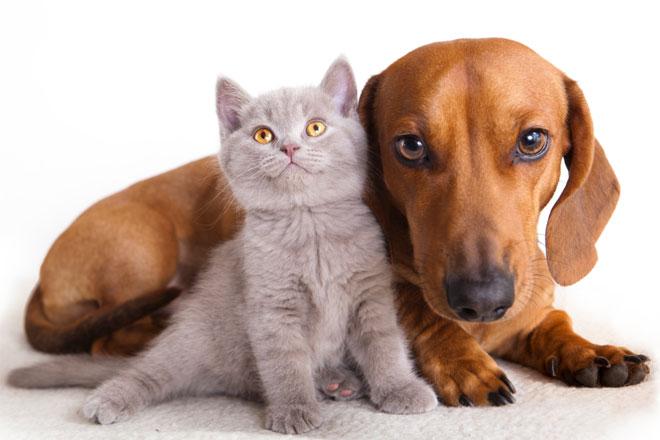 Kedi ve köpek maması alışverişinde en doğru adres