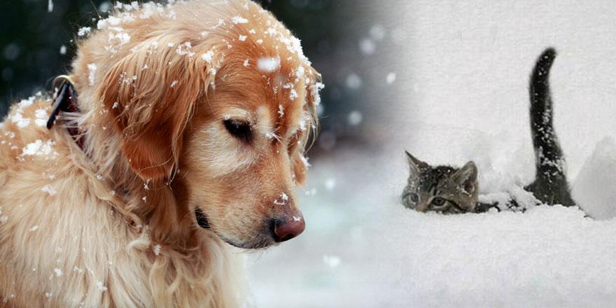 ONLARI UNUTMA! Kediler 6, köpekler 17 saat aç kalınca donarak ölür!