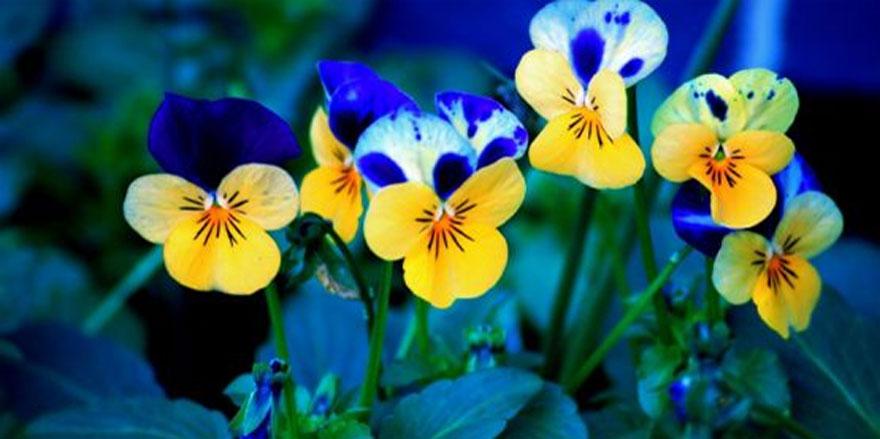 Hızlı çiçek gönder