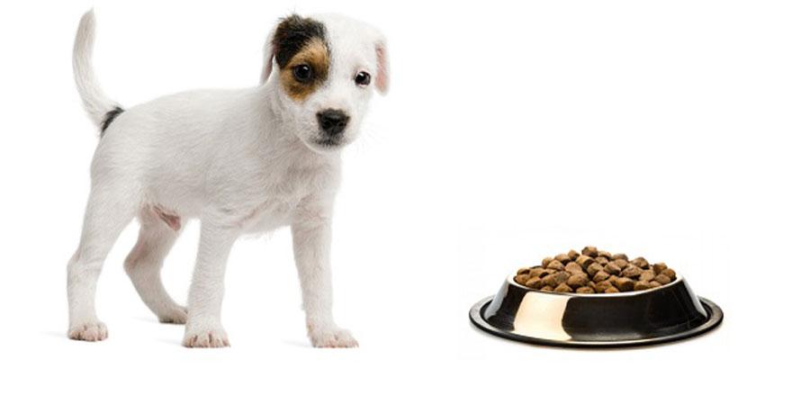 Köpek Maması Kampanya Ürünleri Alınırken Nelere Dikkat Etmelidir?