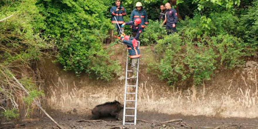 Sarıyer'de mahsur kalan domuzu itfaiye kurtardı