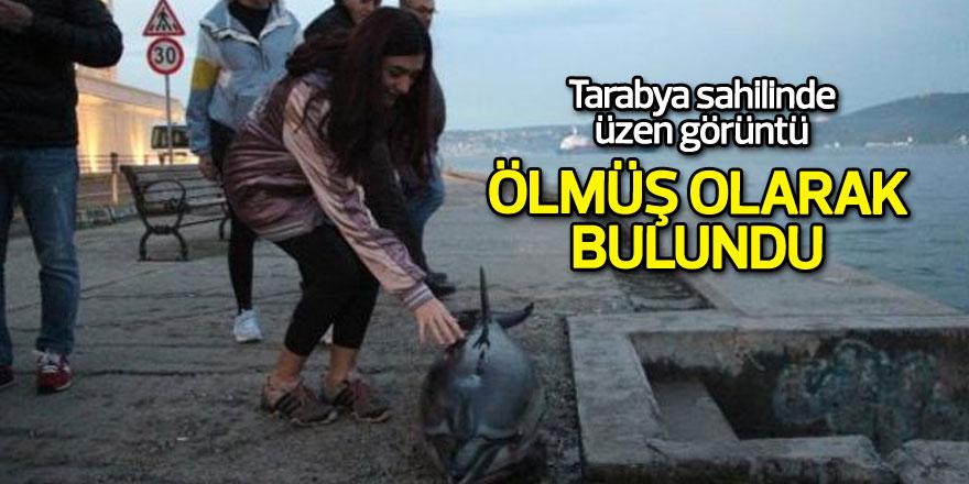 Tarabya sahilinde ölmüş olarak bulundu