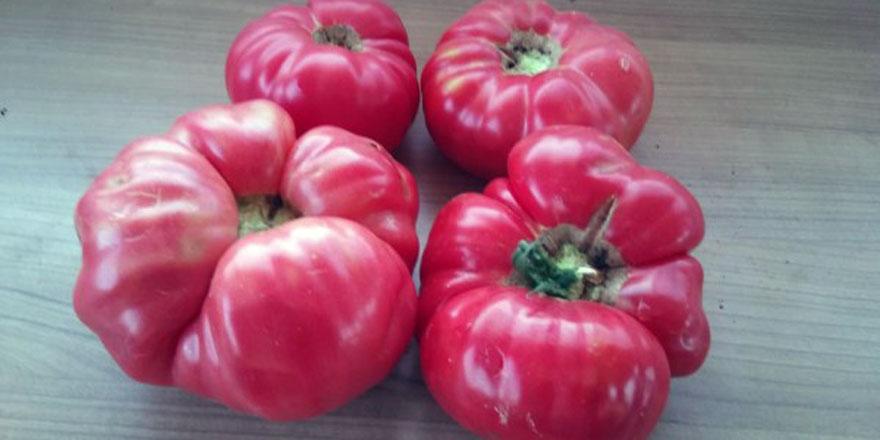 Doğal tohumlar ile sağlıklı beslenin