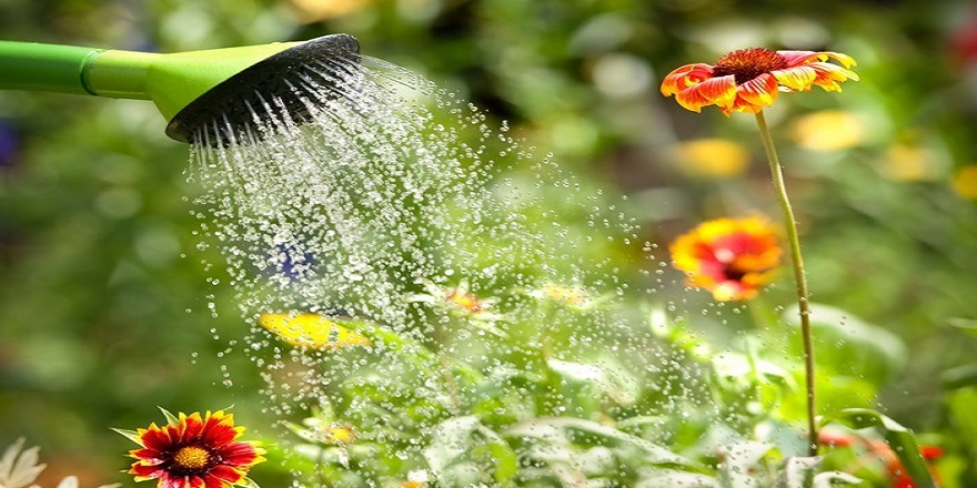 Çiçekler nasıl sulanmalıdır?