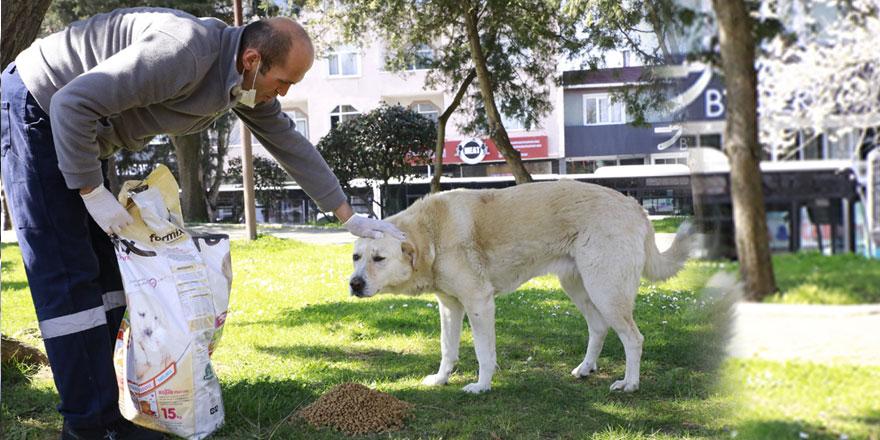 Sarıyer Belediyesi sokak hayvanlarını unutmadı