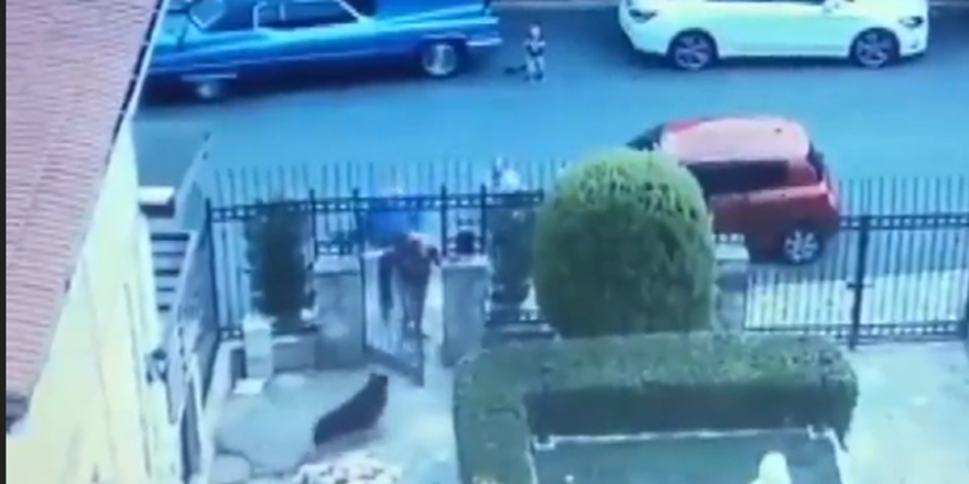 Köpeği silahla öldürdü