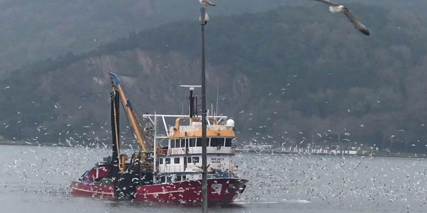 Balıkçılardan hamsi yasağı uyarısı: Doğru ama eksik