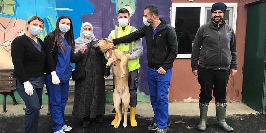 Yaralı köpeğin imdadına belediye ekipleri yetişti