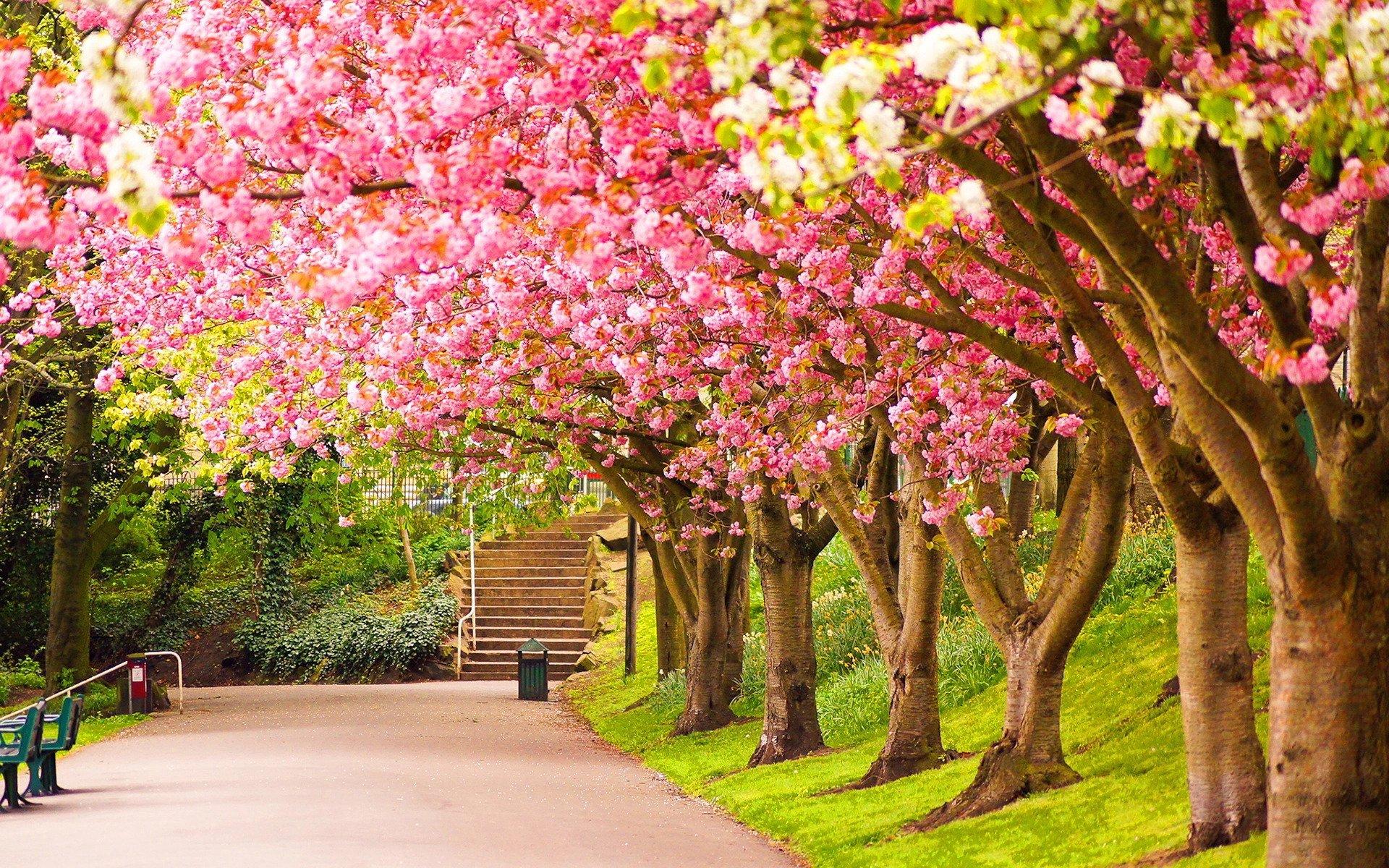 İlkbaharda Yapılacak En Güzel Aktiviteler