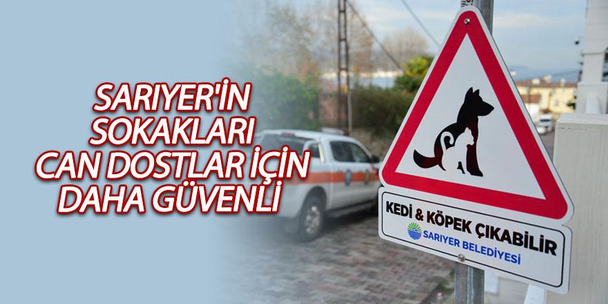 Sarıyer'in sokakları can dostlar için daha güvenli