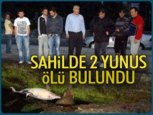 Sahilde 2 yunus ölü bulundu
