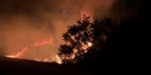 Garipçe'de orman yangın
