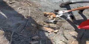Ölüme terk edilen hayvanlar tedavi altına alındı