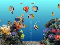 Balık bakımı nasıl olmalı?
