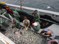 Balıkçılardan 'Vira Bismillah!'