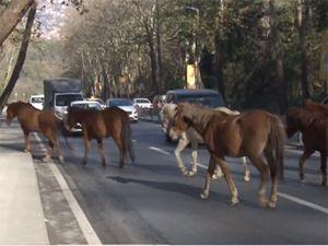 Sarıyer'i başı boş 'atlar' bastı!